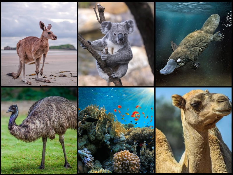 INTERESTING FACTS ABOUT AUSTRALIA'S ANIMALS